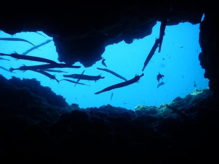 Gran Canaria Dive Sites - Perchel